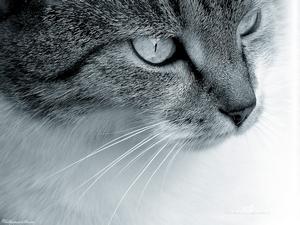 Просмотр профиля: Teo